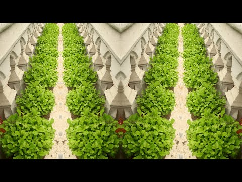 Amazing Green Vegetable Garden on Small Balcony, Growing Vegetables at Home