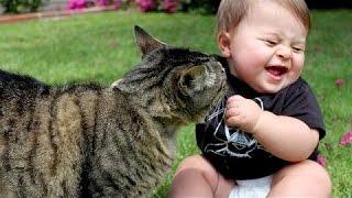 Gatos Divertidos Jugando Con Bebes De Mal Humor - Videos De Gatos Chistosos