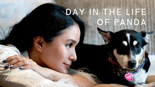 A DAY IN THE LIFE OF PANDA | Heart Evangelista