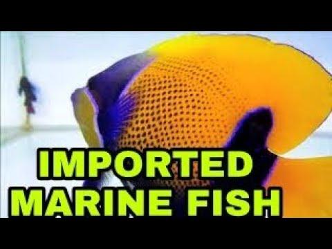 New Marine Fish Stock | UTEKAR FISHERIES