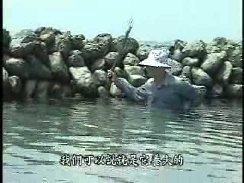 海中的裝置藝術-吉貝嶼的石滬1