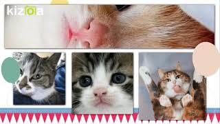 Kizoa Movie - Видео - Создатель слайд-шоу: С днем рождения, котенок!
