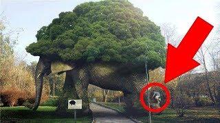 5 Супер Деревьев, в существование которых трудно поверить. Не увидишь - не поверишь