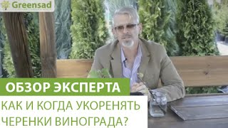 Как и когда укоренять черенки винограда?(В этом видео наш эксперт расскажет Вам о том, когда и как правильно укоренять черенки винограда. Если Вы..., 2015-06-02T13:29:09.000Z)