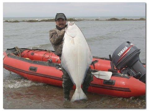 ловля камбалы с берега на донную снасть | fishing for flounder