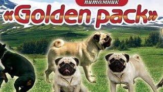 """""""Голден Пак"""" купить недорогие щенки доберманы киев недорого  мопса немецкой овчарки цены"""