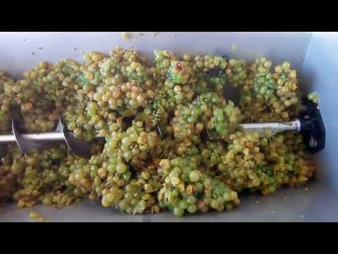 Домашнее виноделие Приготовление белых вин Урожай 2018г