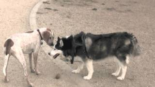 ROSY AND ROCKY  PLAY WITH A PUPPY