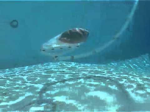 Polaris robot piscine 165 youtube for Aspirateur piscine polaris 165