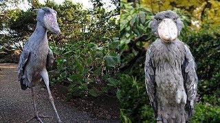 10 Aves Exóticas Únicas En El Mundo