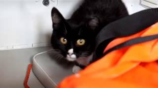 Шесть котов спасли сотрудники МЧС России от «большой» воды