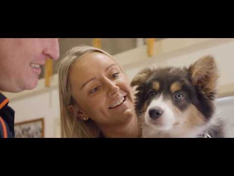 Overseas Pet Travel With Jetpets - How It Works