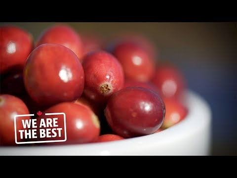 Thanks to Quebec, Canada is the second largest cranberry pro