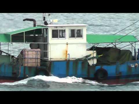 Japan Sea Cranes