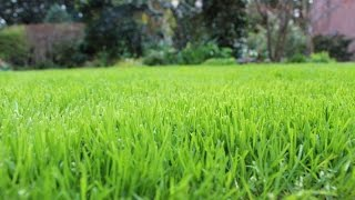 Rasenpflege Reihenfolge im Frühjahr - NewWonder555