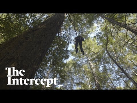 A New Generation Of Activists Put Their Bodies On The Line To Defend California's Forests