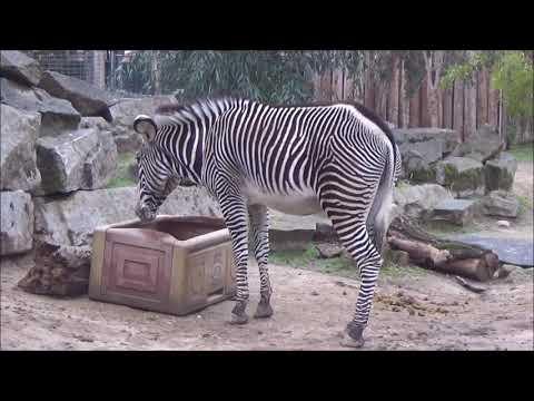 The Sacramento Zoo with Jill & Paul