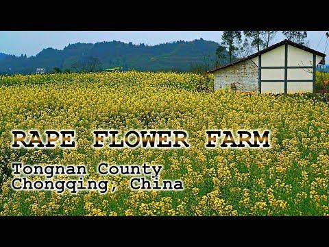 Vast Flower Garden in Tongnan County, CHONGQING - CHINA