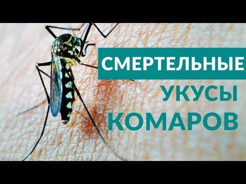 Лихорадка, Комары в Краснодаре переносчики смертельных заболеваний