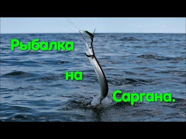 Рыбалка. Сарган. Одесса. Рыбка с зелеными костями. Черноморка. Черное море. Мохнатый червь. Рыба.