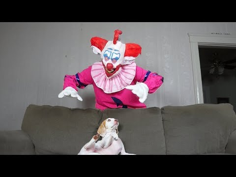 Scary Clown Pranks Dog: Funny Dog Maymo