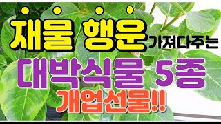 개업선물 돈, 행운, 행복을 가져다주는 대박식물 5종/…