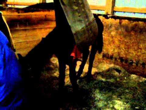 Windchill February 23 2008