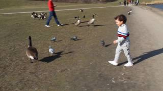 little boy and park games kids boys