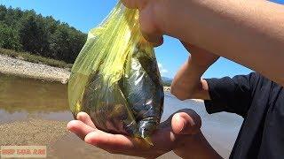 Ngày hè :  Phần 2: Bắt ốc, chọc cá ở sông thiên nhiên cực đẹp