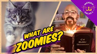 Cat Zoomies: the cute, the fun, the mystery   unlocked!