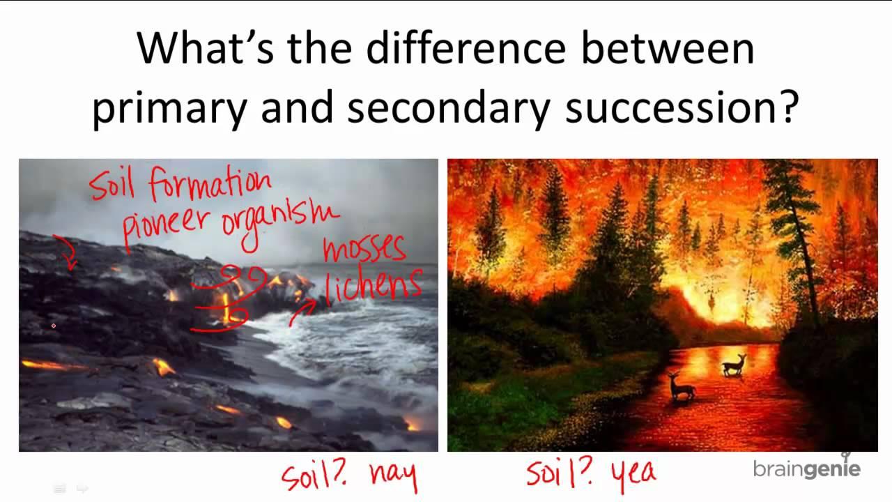 15 3 1 Primary V Secondary Succession