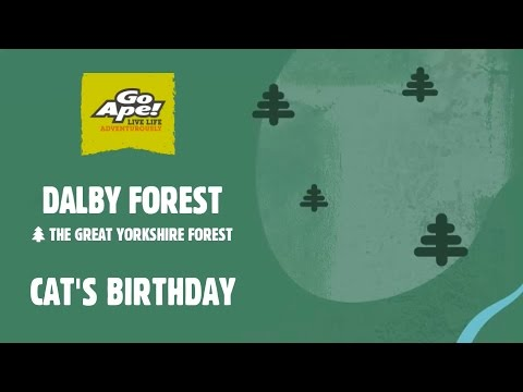 Dalby Forest Go Ape - Cats Birthday