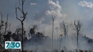 Amazon rainforest fires could have global implications | 7.30