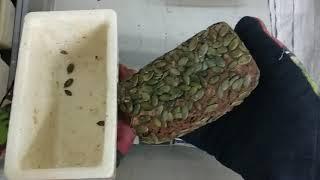 """Вынимание хлеба на закваске из керамических форм """"Едлин Хлеб"""" ЕХ-1, формы не смазывались маслом."""
