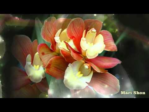 Орхидеи « Цветы -