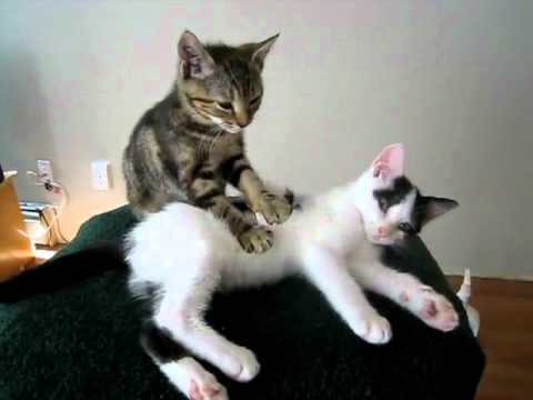 Les chats aussi savent se masser ... MDR