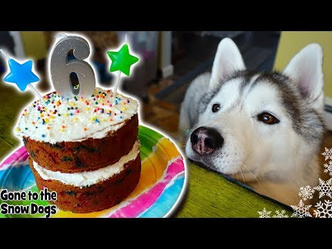 How to Make a FunFetti Birthday Cake For Dogs | DIY Dog Treats Recipe 116