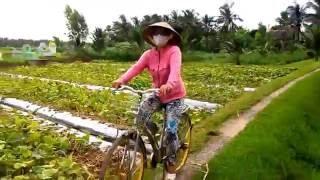Có ai ngang qua thị xã Gò Công, Tiền Giang