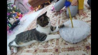 kediciklerimizin evlerini kurduk ponçik ve alinaya yeni sürpriz var eğlenceli çocuk videosu