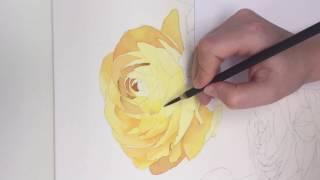 "Progress of watercolor ""Ranunculus"", part 1.  How to draw flowers. Как рисовать цветы"