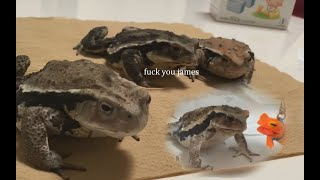 frog commentary 6