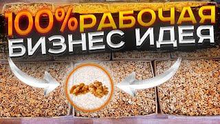 Подробный бизнес план по чистке грецкого ореха из моего опыта! Сколько я заработал? cмотреть видео онлайн бесплатно в высоком качестве - HDVIDEO