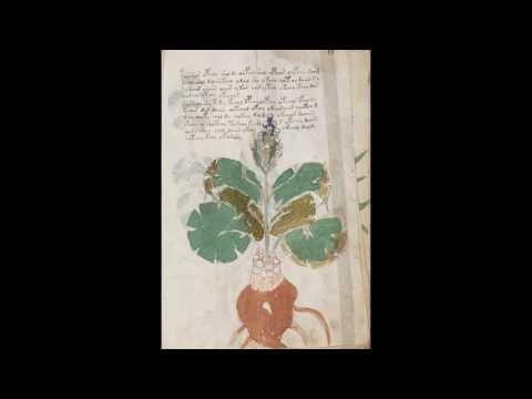 Рукопись Войнича, Манускрипт Войнича. 209 страниц (1080 HD)