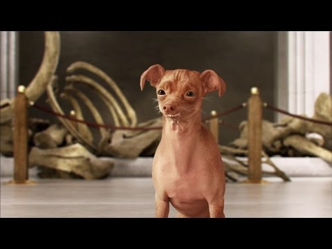 KOFOLA DOG – museum, full CGI TV commercial.