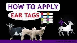 Lamb and Goat Ear Tagging: For Beginners