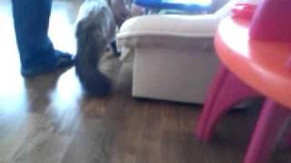 Невский маскарадный кот