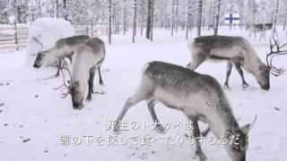 北欧といえば皆さん何を思い浮かべますか? 雄大な自然、厳しい冬、デザ...