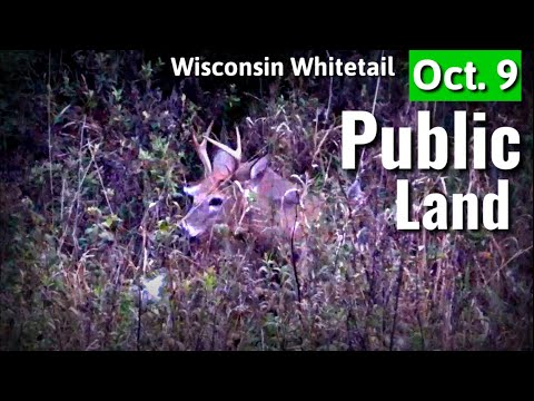 Buck In Range - Public Land Bow Hunting 2019- October Lull