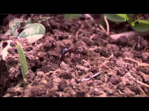 Army Ants: Nature's Deadliest Organization