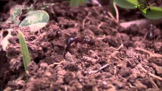 Army Ants: Nature